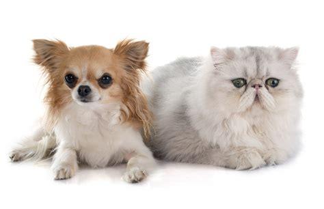 alimenti cani e gatti adoc lancia la linea bio di alimenti per cani e gatti