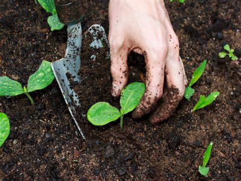 Efficient Ways To Manure A Vegetable Garden Boldsky Com Manure Vegetable Garden