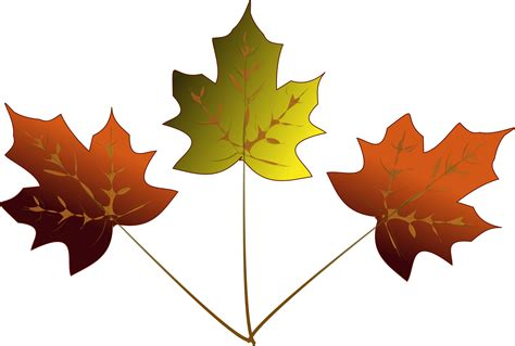 Drawing Leaves by Maple Leaf Drawing Clipart Best