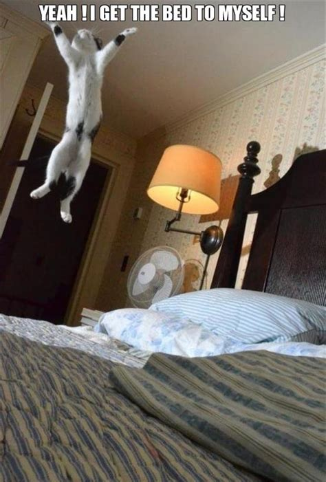 funny cat beds funny cat jumping on the bed dump a day