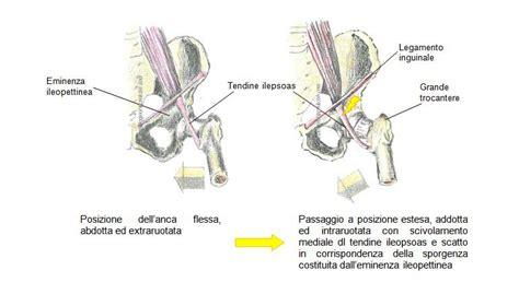 ecografia bitest interna o esterna lesioni dell anca