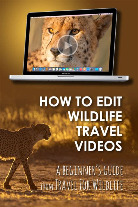 adobe photoshop tutorial how to edit a photo how to edit videos of wildlife adobe premiere pro