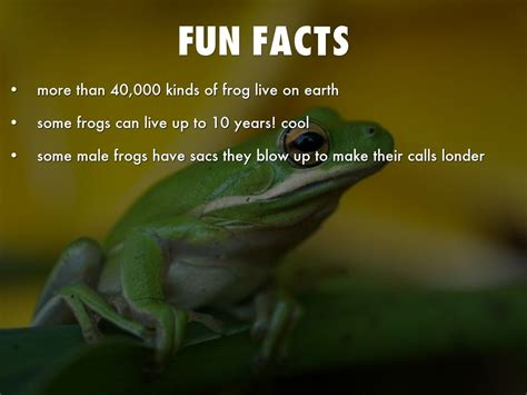 facts about green green tree frog by rito singleton