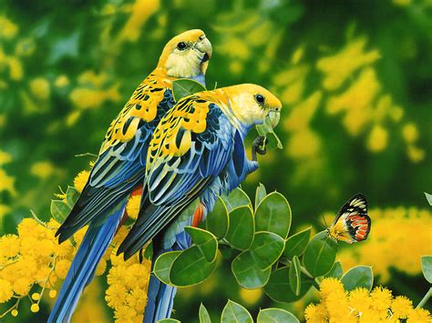 bird wall paper wallpapers love birds desktop wallpapers