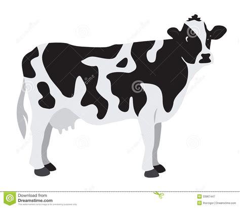 imagenes de vacas a blanco y negro cow royalty free stock photography image 33967447