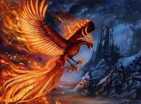 fonds decran oiseau phenix magiques animaux aile animaux