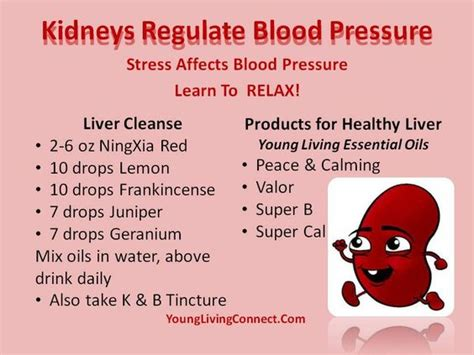 Detox Low Blood Pressure by Healthy Liver Liver Cleanse And Blood Pressure On