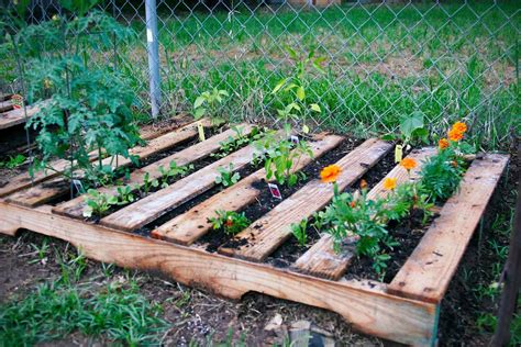 weedless raised wood pallet garden bed