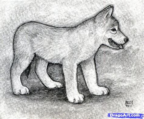 Drawing Wolf by How To Draw A Wolf Puppy Step By Step Realistic Drawing