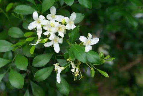 sukses menanam  merawat tanaman hias bunga