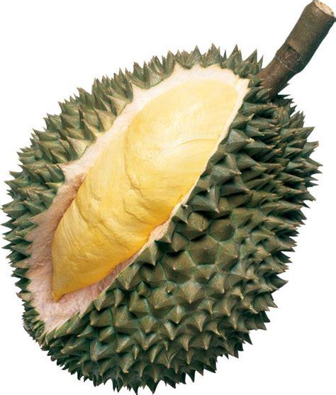 buah buahan gambar buah buahan tempatan