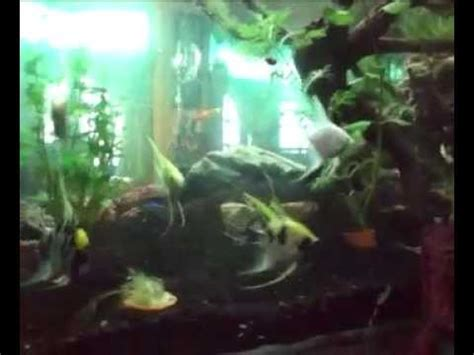 Lu Aquarium Dalam Air aquarium taman air terjun dalam aquarium tembus ruang tamu