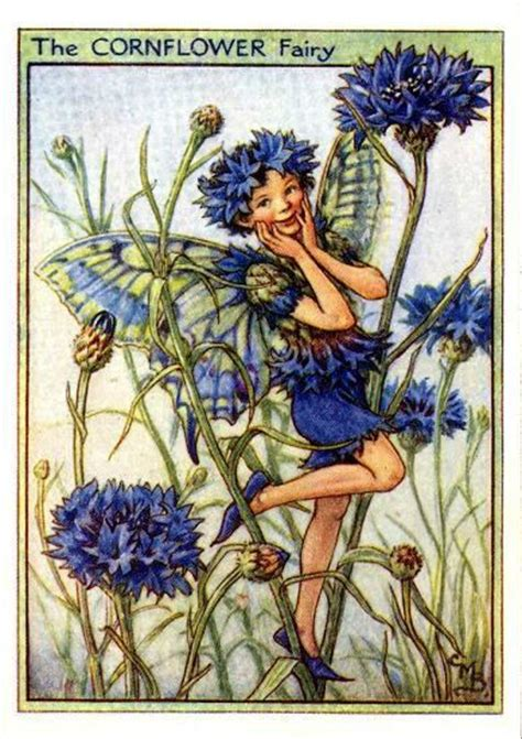 Flower Fairies Of The Garden Cornflower Flower Vintage Print Cicely Barker The Flower Shop