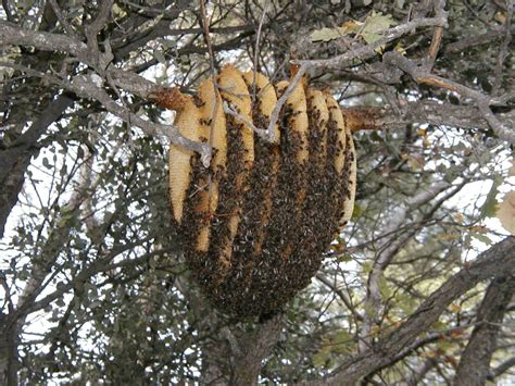 Design Your Own Home Western Australia beeswing net the bee inspiration behind the sun hive