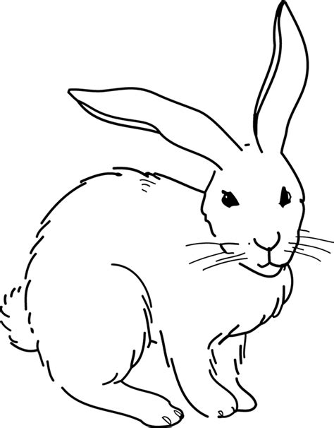 Lapin R 233 Seau Canop 233 Direction Territoriale Acad 233 Mies