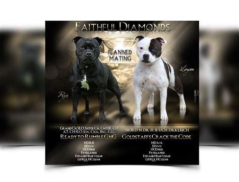 puppy for sale flyer templates breeder webdesign kennel design best breeder