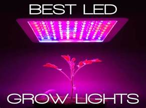 Growing Lights by Best Led Grow Lights Guide Be An Informed Buyer
