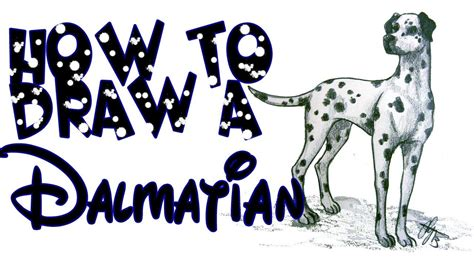 how to a dalmatian how to draw a dalmatian