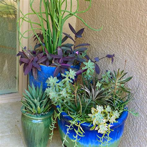 Annuals For Planters by Desert Gardening Favorite Summer Container Plants