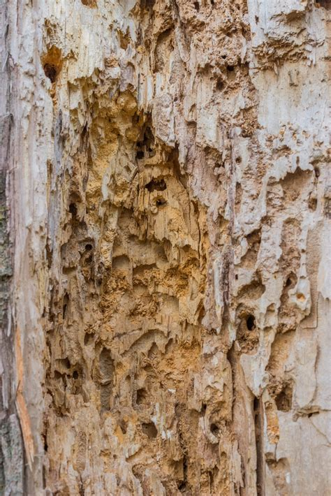 Termite Swarmers Images