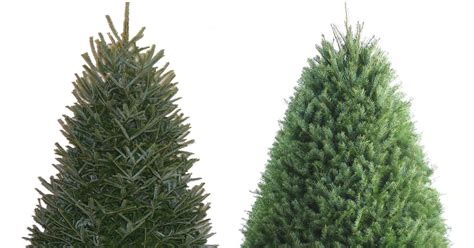 lowes in roseburg or for fresh x mas trees lowe s 25 fresh trees 3 5 foot fraser fir trees only 14 98 regularly 20
