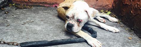 abandoned dogs 100 abandoned dogs of everglades florida inc rescue