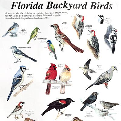 florida backyard birds florida backyard birds outdoor goods