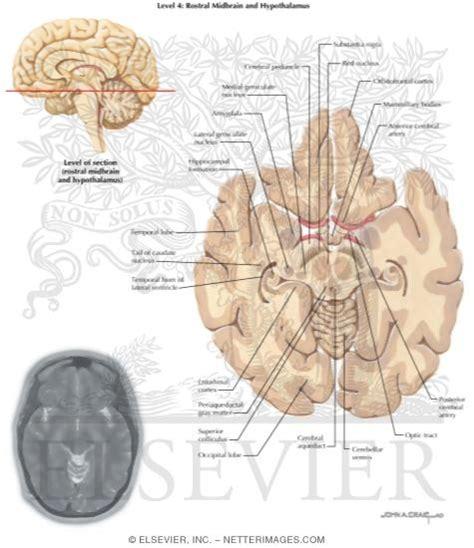 axial section illustrations in neuroanatomy rubin 1e