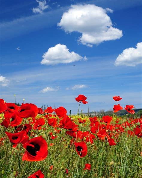 sfondi hd fiori sfondi hd fiori per desktop primavera sfondi hd gratis