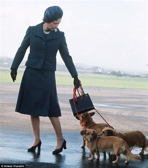queen elizabeth dog queen against new dogs in buckingham palace in case she