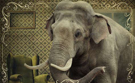 The Elephant In The Room by Logansport Church Of The Elephant In The Room