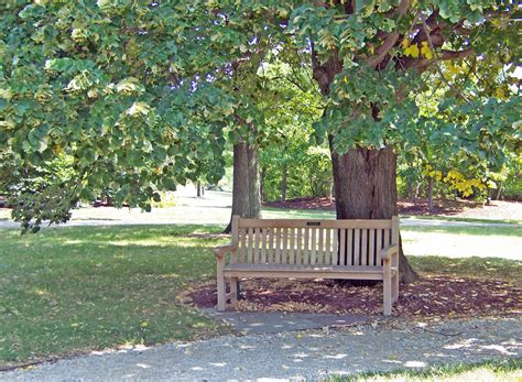 bench in the park park bench free stock photo public domain pictures