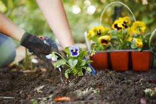 garden flowers and plants landscaping birmingham getting ready to plant flowers