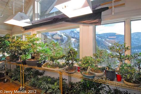 plants that grow in rooms plants that grow in rooms 28 images add a green plants
