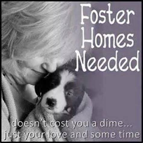 foster homes for dogs cats welcome to your pet space