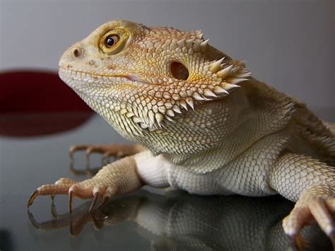 5 things i learned from being a lizard on tinder