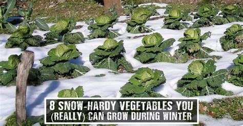 8 Snow Hardy Vegetables You Really Can Grow During What To Grow In Winter Vegetable Garden
