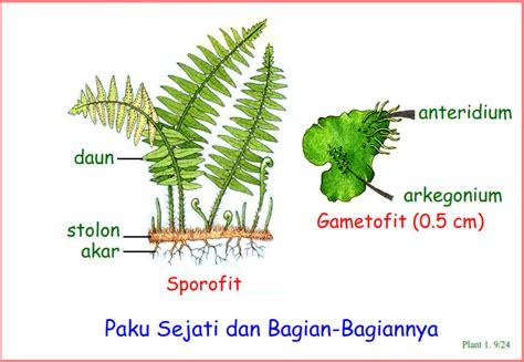 Biologi U biologi gonzaga seluk beluk tumbuhan 1