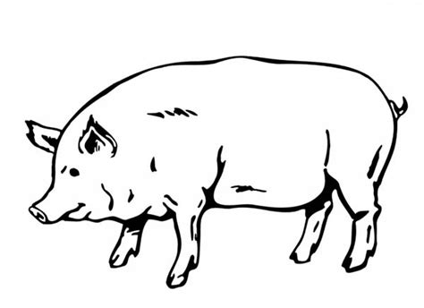 fat pig coloring page big and fat pig coloring page big and fat pig coloring