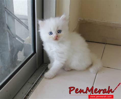 wallpaper anak kucing comel gambar kucing comel dan lawak www imgkid com the image