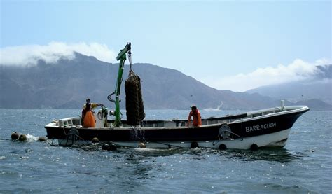 peru seafood fishing industry companies d j info european buyers face another year of scarce peruvian