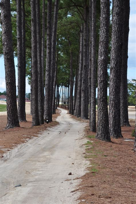 trees nc 10 images about pinehurst nc on resorts