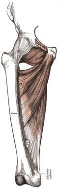 innere beinmuskulatur oberschenkel