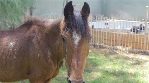 ghost town rescue wa ghost town adopts second after rescue f3news