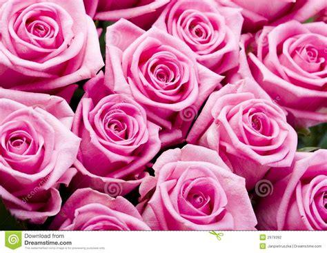 imagenes romanticas rosas related keywords suggestions for imagenes de flores