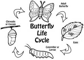 Butterfly Cycle Coloring Page butterfly cycle printable butterfly cycle