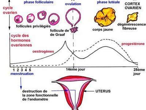 Contraception Calendrier Existe T Il Une M 233 Thode De Contraception Naturelle Sans