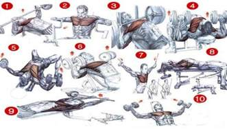 chest bench workout top 5 best chest exercises all bodybuilding