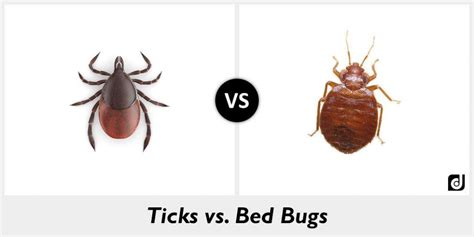 flea vs bed bug difference between ticks and bed bugs