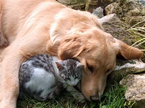 puppy friends that special relationship between dogs and cats the trupanion